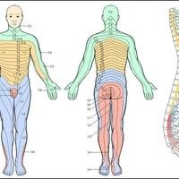 Kennzeichnung der Dermatome